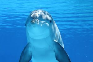 dolphinhumanmasterpeace